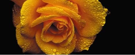 10月 おすすめの香り ODEROSAE